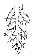 Тест по биологии Органы цветковых растений 1 вариант 11 задание