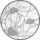Тест по биологии Ткани растений и животных 1 вариант 8 задание