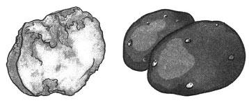Тест по биологии Многообразие и значение грибов 1 вариант 5 задание