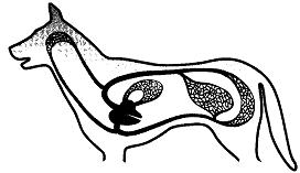 Тест по биологии Класс Млекопитающие или Звери 2 вариант задание В1