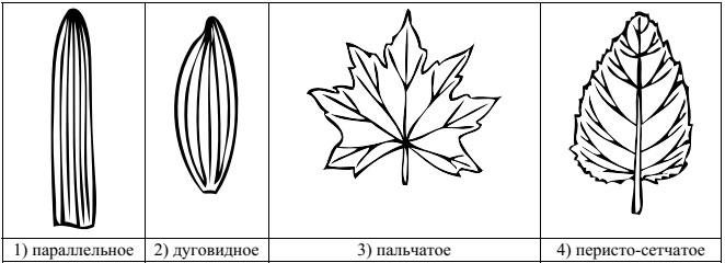 Образец ВПР 2018 по биологии 5 класс 3_3