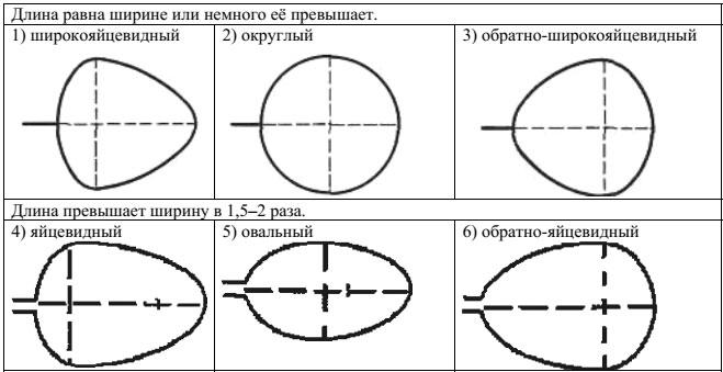 Образец ВПР 2018 по биологии 5 класс 3_4