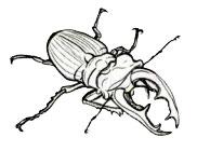 Назовите жука