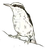Птица 1 вариант 8 задание