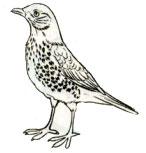 Птица 2 вариант
