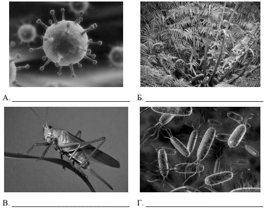 фотографии с изображением представителей различных объектов природы