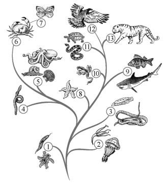 Схема Развитие животного мира земли